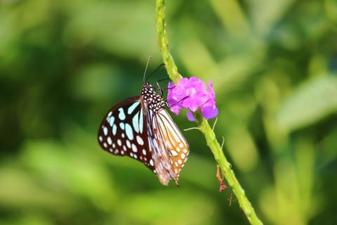 Native Biodiversity Garden